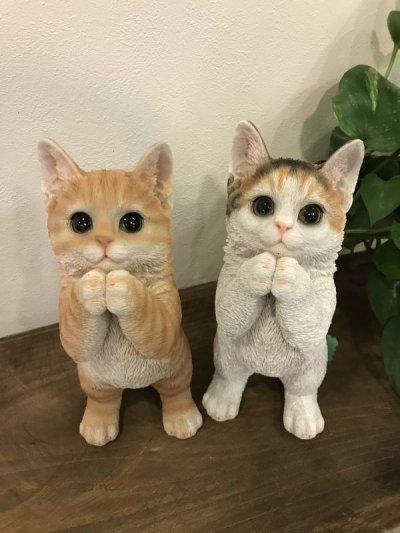 画像3: お願い猫